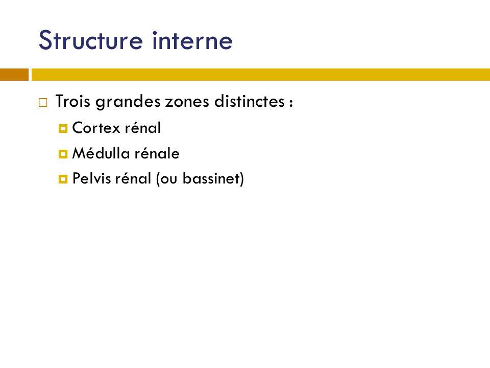 Structure interne Trois grandes zones distinctes : Cortex rénal Médulla rénale Pelvis rénal (ou bassinet)