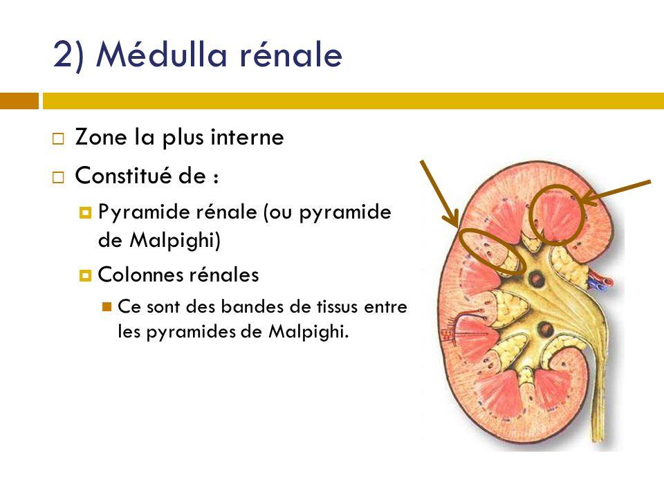 2) Médulla rénale Zone la plus interne Constitué de : Pyramide rénale (ou pyramide de Malpighi) Colonnes rénales Ce sont des bandes de tissus entre le