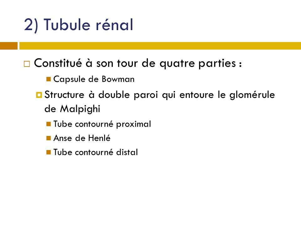 2) Tubule rénal Constitué à son tour de quatre parties : Capsule de Bowman Structure à double paroi qui entoure le glomérule de Malpighi Tube contourn