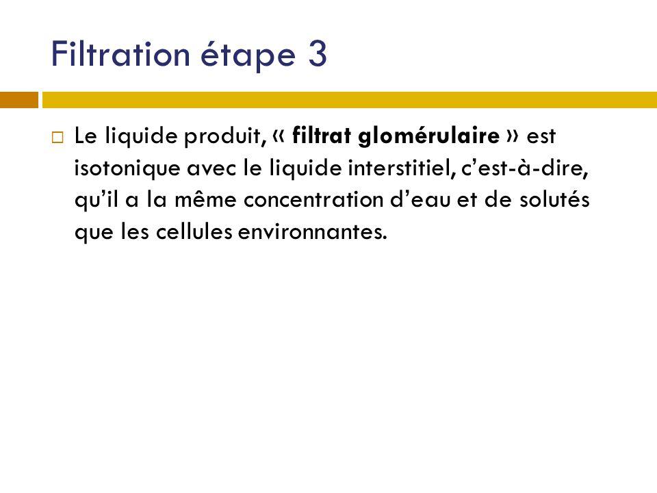 Filtration étape 3 Le liquide produit, « filtrat glomérulaire » est isotonique avec le liquide interstitiel, cest-à-dire, quil a la même concentration