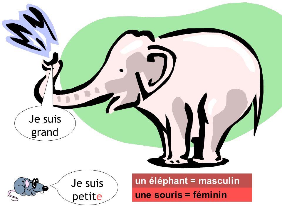 Je suis petite Je suis grand un éléphant = masculin une souris = féminin