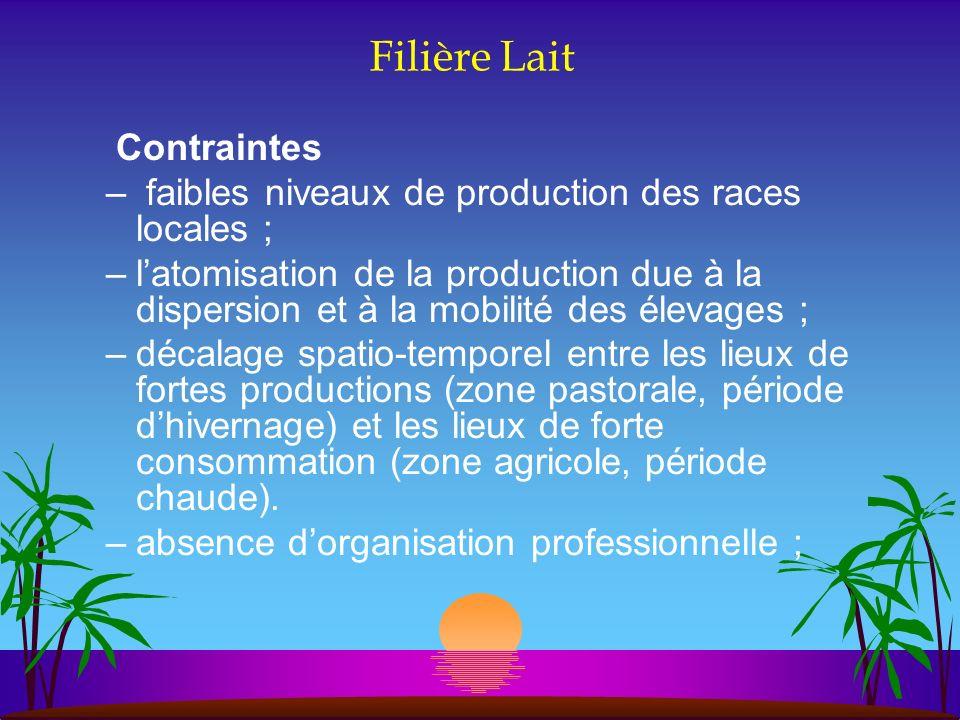 Filière Lait Contraintes – faibles niveaux de production des races locales ; –latomisation de la production due à la dispersion et à la mobilité des é