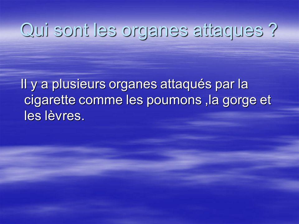 Qui sont les organes attaques ? Il y a plusieurs organes attaqués par la cigarette comme les poumons,la gorge et les lèvres. Il y a plusieurs organes