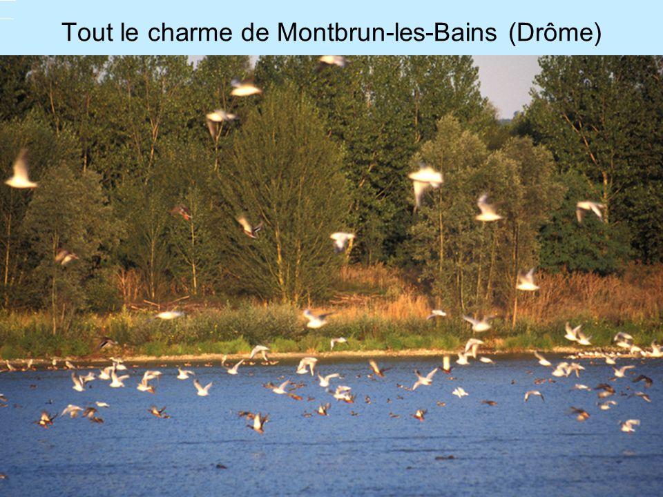 Tout le charme de Montbrun-les-Bains (Drôme)