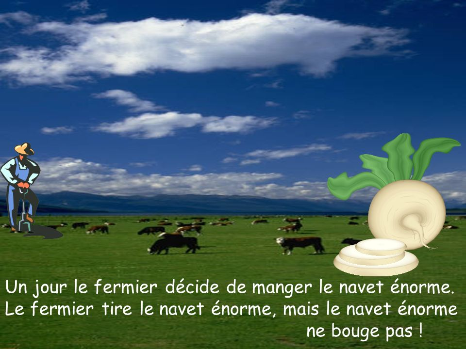 Un jour le fermier décide de manger le navet énorme. Le fermier tire le navet énorme, mais le navet énorme ne bouge pas !