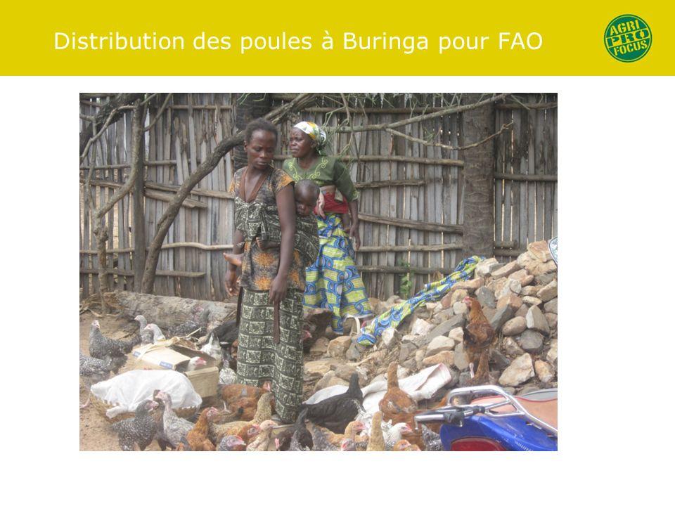 Distribution des poules à Buringa pour FAO