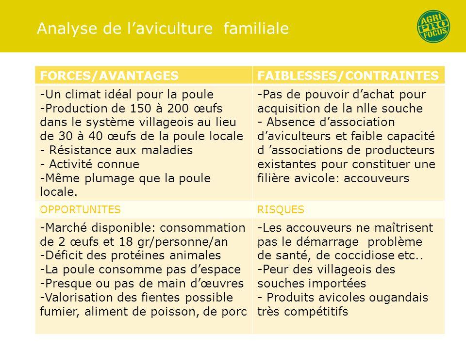 Analyse de laviculture familiale FORCES/AVANTAGESFAIBLESSES/CONTRAINTES -Un climat idéal pour la poule -Production de 150 à 200 œufs dans le système v