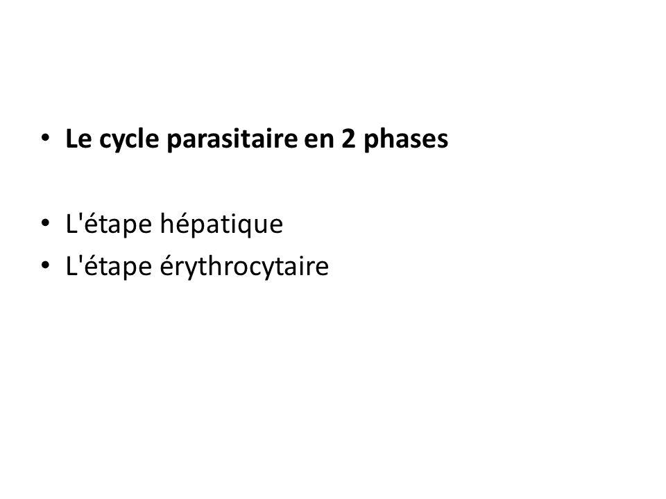 Le cycle parasitaire en 2 phases L'étape hépatique L'étape érythrocytaire