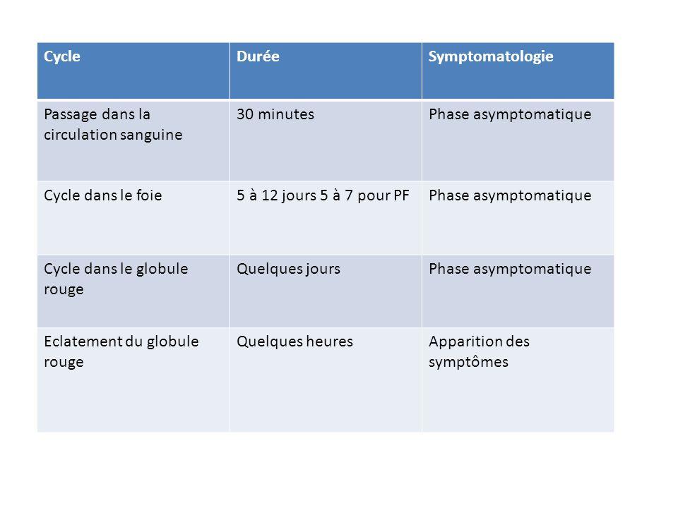 CycleDuréeSymptomatologie Passage dans la circulation sanguine 30 minutesPhase asymptomatique Cycle dans le foie5 à 12 jours 5 à 7 pour PFPhase asympt