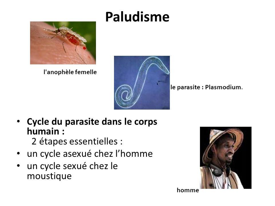 Paludisme Cycle du parasite dans le corps humain : 2 étapes essentielles : un cycle asexué chez lhomme un cycle sexué chez le moustique l'anophèle fem