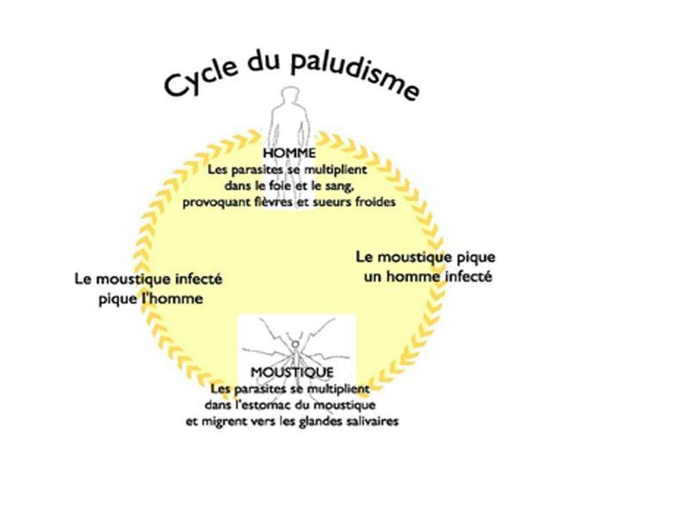 les patients infectés par P.falciparum et présentant plus de 100.000 parasites par µl (plus de 250 parasites par champ de GE ou 2 p.100 de globules rouges parasités) nécessitent une attention particulière, surtout si l hématocrite est bas.