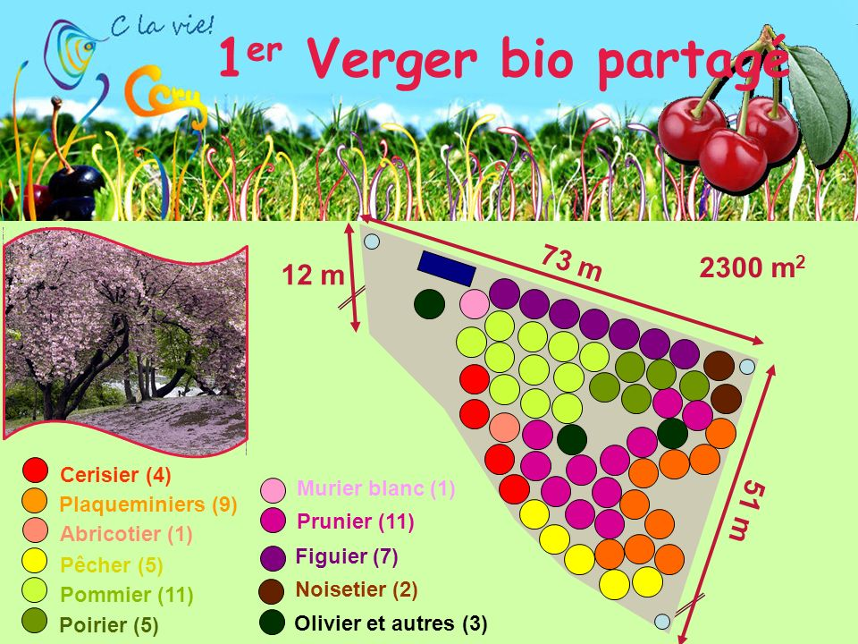 12 m 51 m 73 m Abricotier (1) Plaqueminiers (9) Olivier et autres (3) Noisetier (2) Figuier (7) Cerisier (4) Pêcher (5) Pommier (11) Poirier (5) 1 er Verger bio partagé Murier blanc (1) Prunier (11) 2300 m 2