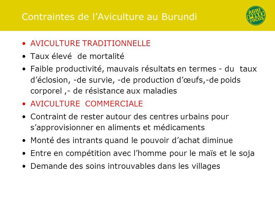 Contraintes de lAviculture au Burundi AVICULTURE TRADITIONNELLE Taux élevé de mortalité Faible productivité, mauvais résultats en termes - du taux déc