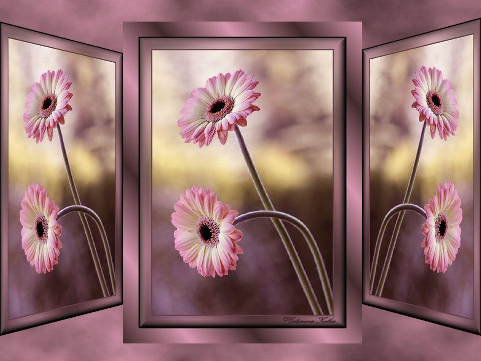 Nous nous pensons malheureux et de ce fait nous empêchons les vibrations intérieures d atteindre notre cœur… La visite d un (e ) ami(e ) nous comble de bonheur… Profitons de ces instants uniques… Pour trouver la joie intérieure, il faut apprendre à relativiser les évènements… Chasser nos peurs qui sont là depuis toujours pour nous permettre d avancer… Prendre la vie…notre vie par la main…