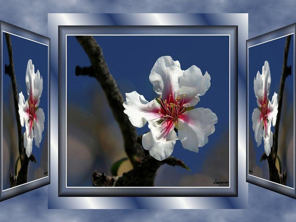 Nous pensons aussi que la joie dépend de l autre… Mais c est parce que nous accordons notre attention sur l aspect négatif de la situation passée ou présente … Cette joie ne dépend que de nous… Alors vivons-la cette vie… Qu attendons-nous!!.