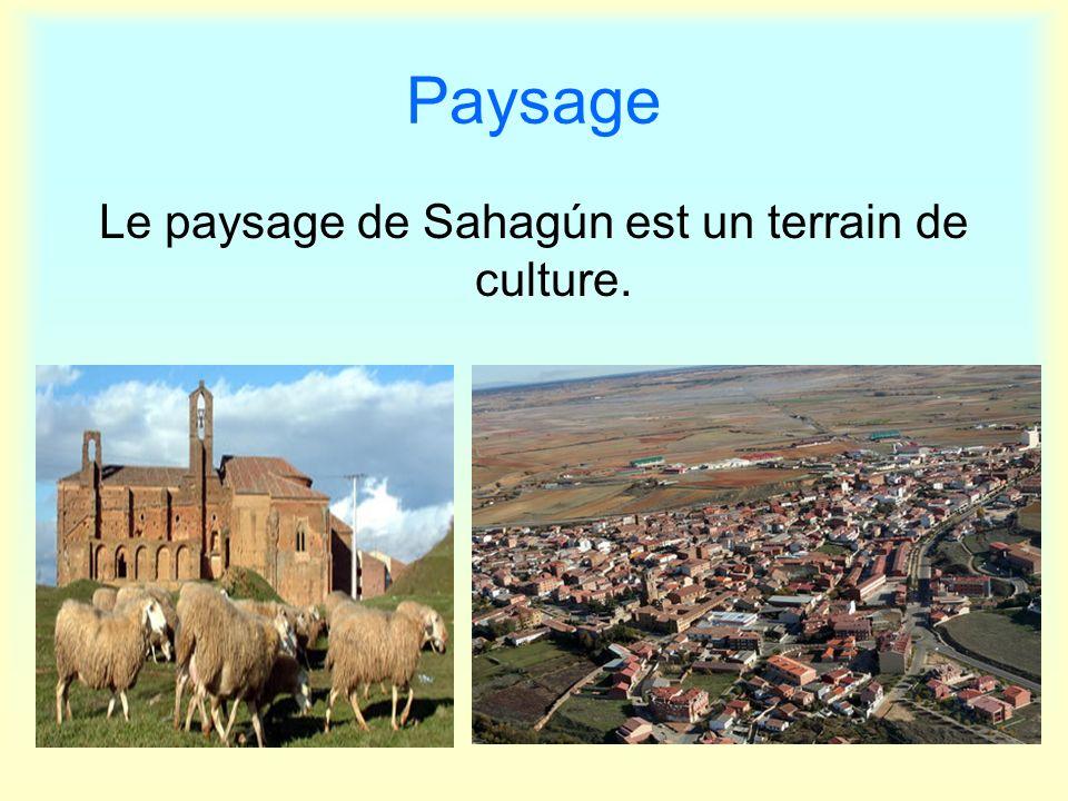 Paysage Le paysage de Sahagún est un terrain de culture.