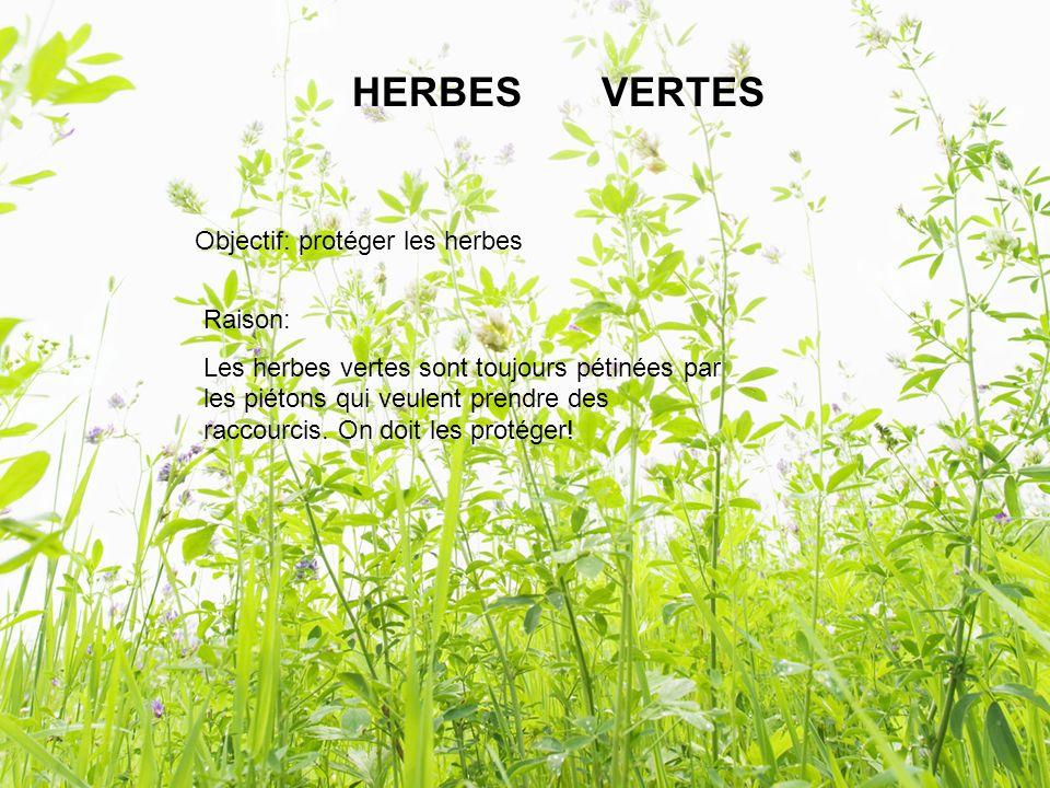 HERBES VERTES Objectif: protéger les herbes Raison: Les herbes vertes sont toujours pétinées par les piétons qui veulent prendre des raccourcis.