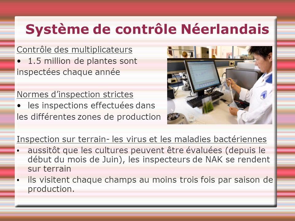 Système de contrôle Néerlandais Contrôle des multiplicateurs 1.5 million de plantes sont inspectées chaque année Normes dinspection strictes les inspe