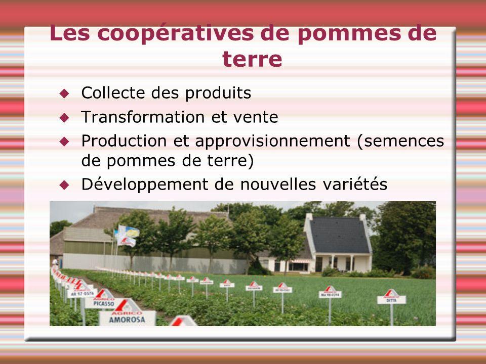 Les coopératives de pommes de terre Collecte des produits Transformation et vente Production et approvisionnement (semences de pommes de terre) Développement de nouvelles variétés