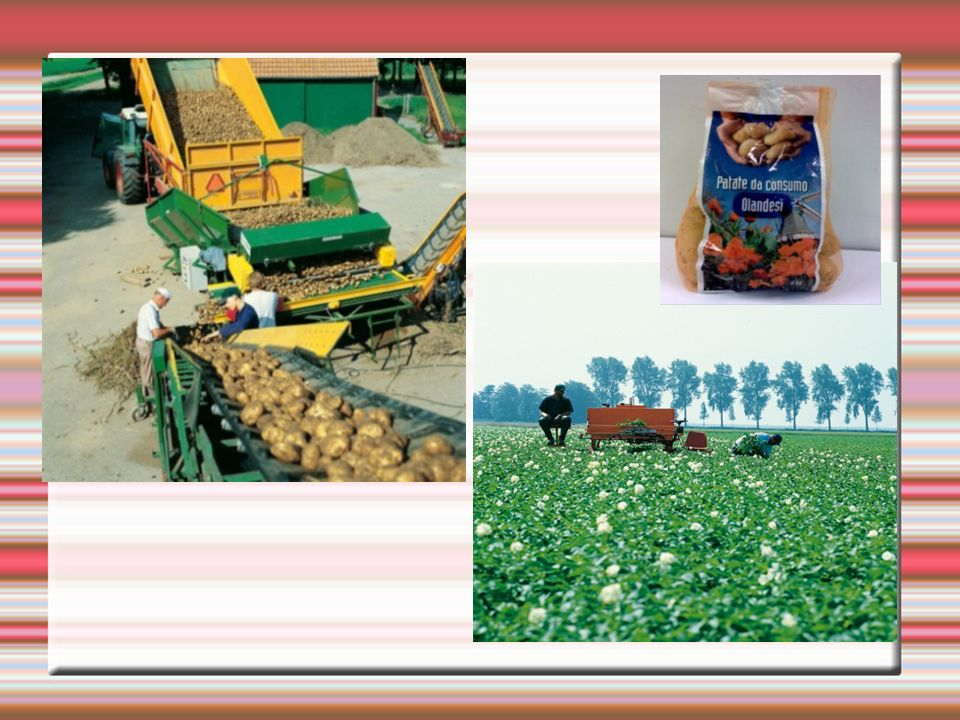 Le monde, notre marché A travers les coopératives, un agriculteur individuel a la possibilité de: trouver des marchés lointains suivre les changements rapides dans les demandes des consommateurs améliorer la qualité et la quantité de sa production.