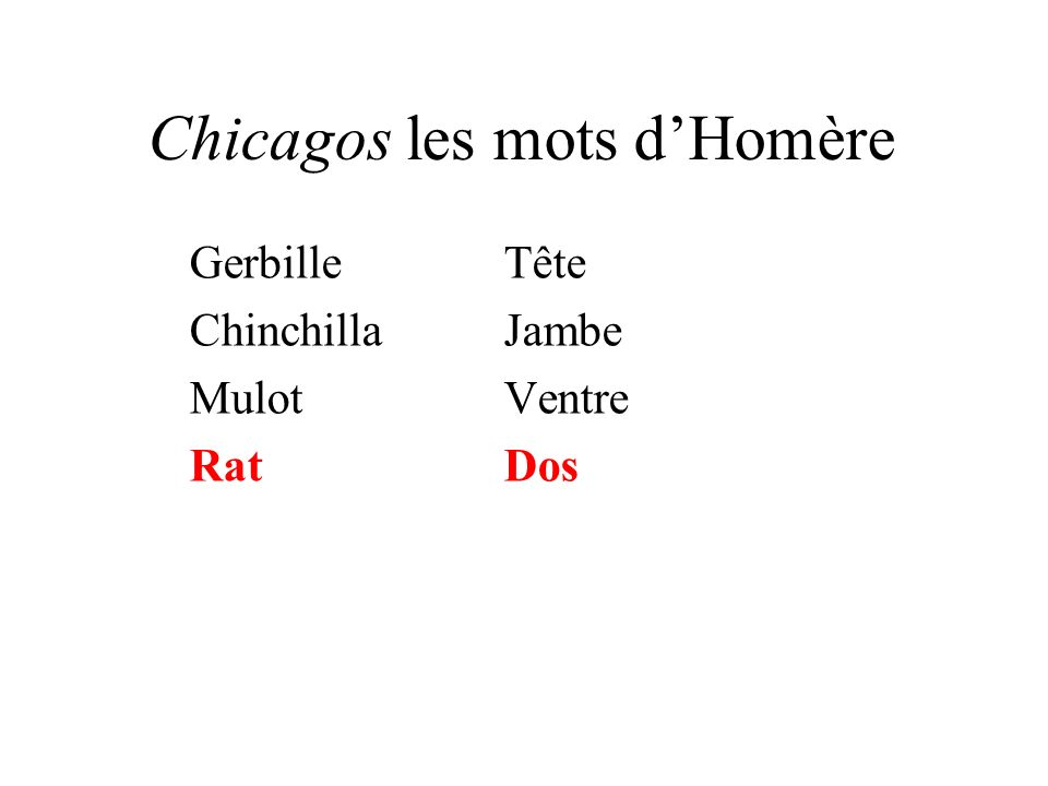 Chicagos les mots dHomère GerbilleTête ChinchillaJambe MulotVentre RatDos