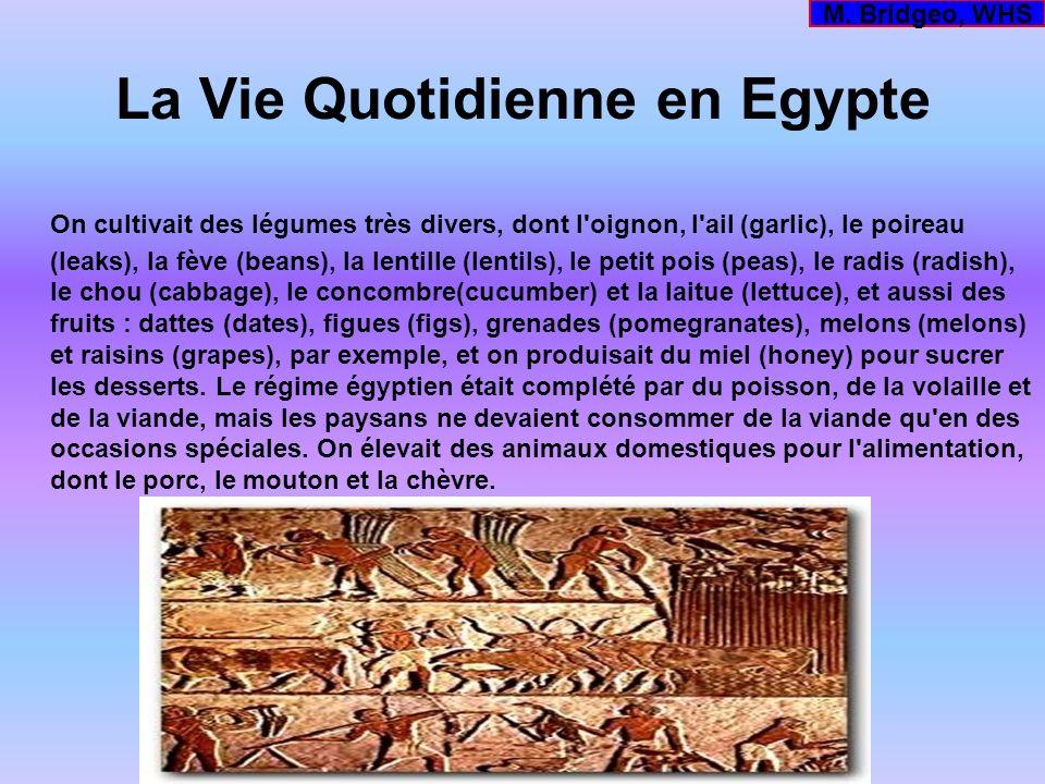 La Vie Quotidienne en Egypte On cultivait des légumes très divers, dont l'oignon, l'ail (garlic), le poireau (leaks), la fève (beans), la lentille (le