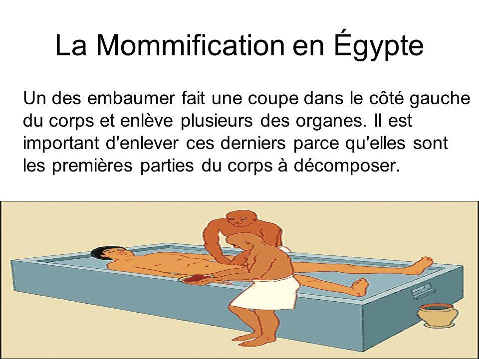 La Mommification en Égypte Un des embaumer fait une coupe dans le côté gauche du corps et enlève plusieurs des organes. Il est important d'enlever ces