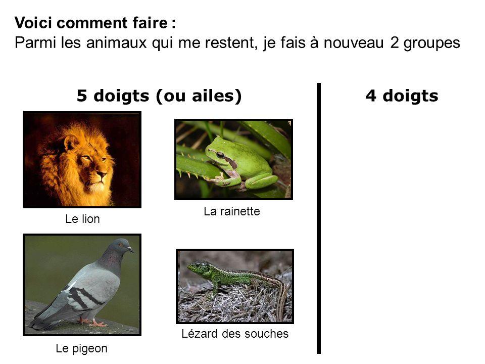 Voici comment faire : Parmi les animaux qui me restent, je fais à nouveau 2 groupes Le lion La rainette Le pigeon Lézard des souches 5 doigts (ou aile