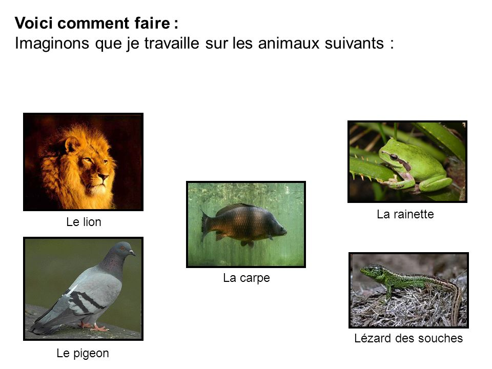 Voici comment faire : Imaginons que je travaille sur les animaux suivants : Le lion La rainette Le pigeon La carpe Lézard des souches