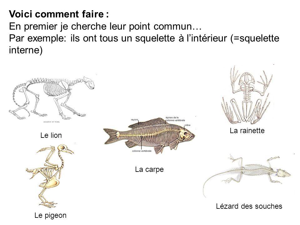 Voici comment faire : En premier je cherche leur point commun… Par exemple: ils ont tous un squelette à lintérieur (=squelette interne) Le lion La rai
