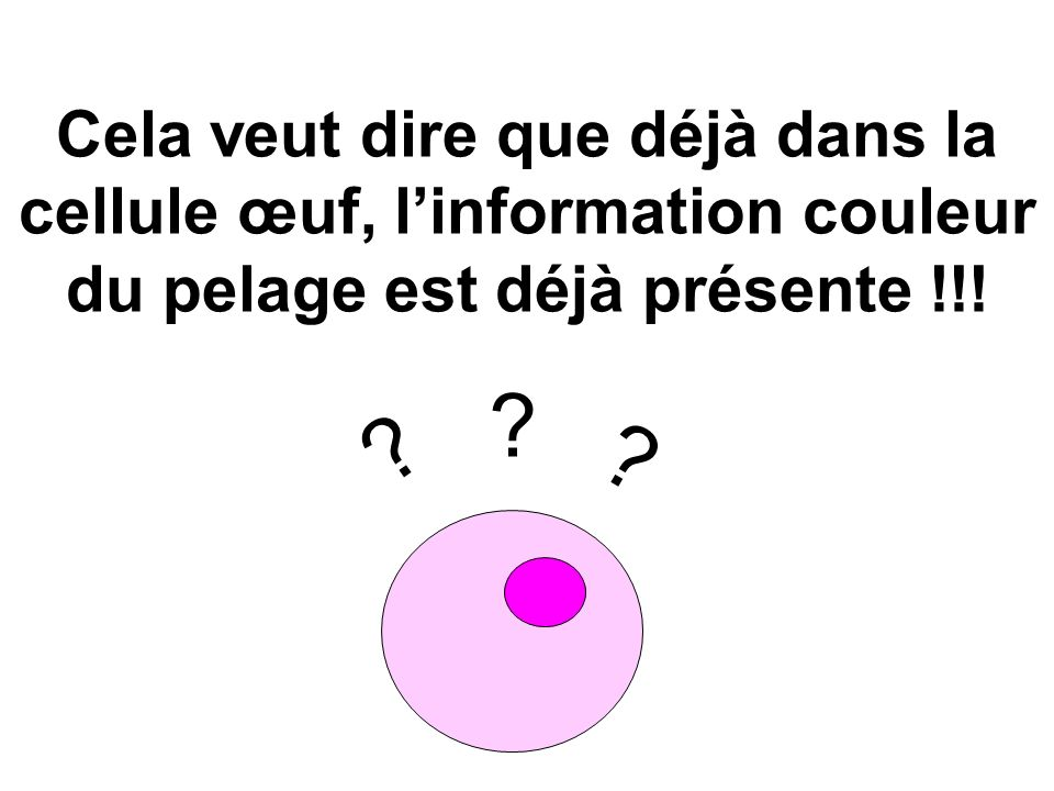 Cela veut dire que déjà dans la cellule œuf, linformation couleur du pelage est déjà présente !!! ? ? ?