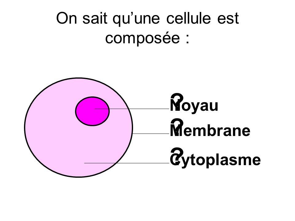 On sait quune cellule est composée : ? ? ? Noyau Membrane Cytoplasme