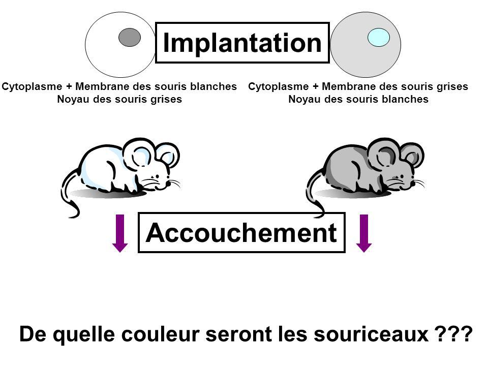 ? ? Cytoplasme + Membrane des souris blanches Noyau des souris grises Cytoplasme + Membrane des souris grises Noyau des souris blanches Implantation A