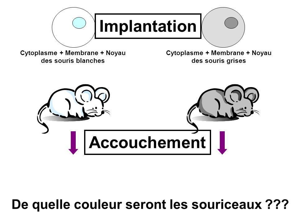 ? ? Cytoplasme + Membrane + Noyau des souris blanches Cytoplasme + Membrane + Noyau des souris grises Implantation Accouchement De quelle couleur sero