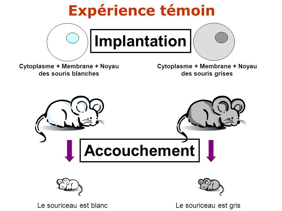 ?? Cytoplasme + Membrane + Noyau des souris blanches Cytoplasme + Membrane + Noyau des souris grises Implantation Accouchement Le souriceau est blancL
