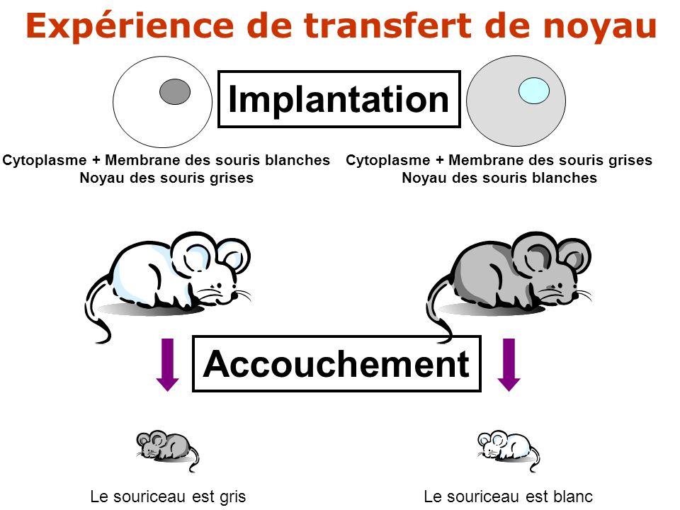 ?? Cytoplasme + Membrane des souris blanches Noyau des souris grises Cytoplasme + Membrane des souris grises Noyau des souris blanches Implantation Ac