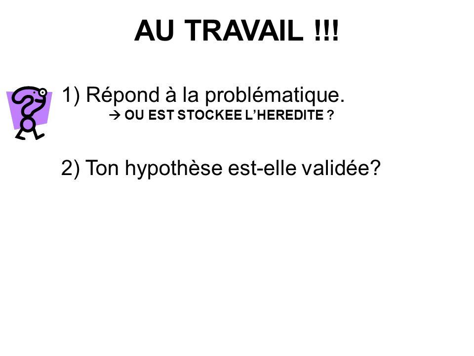 1) Répond à la problématique. OU EST STOCKEE LHEREDITE ? 2) Ton hypothèse est-elle validée?