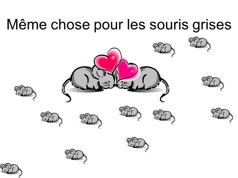 Même chose pour les souris grises