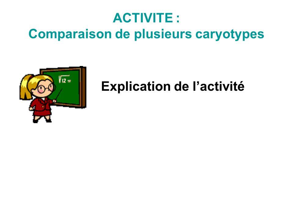 Explication de lactivité ACTIVITE : Comparaison de plusieurs caryotypes
