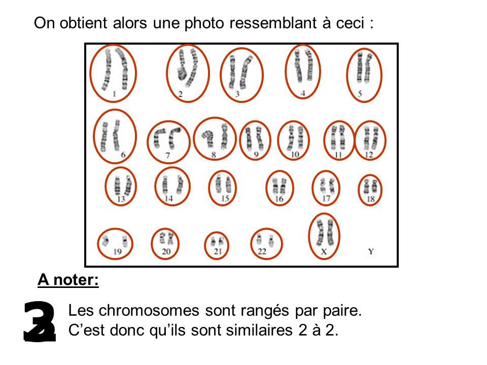 On obtient alors une photo ressemblant à ceci : A noter: 3 Les chromosomes sont rangés par paire. Cest donc quils sont similaires 2 à 2. 2