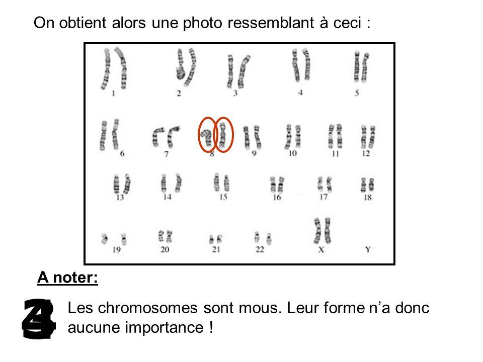 On obtient alors une photo ressemblant à ceci : A noter: Les chromosomes sont mous. Leur forme na donc aucune importance ! 43