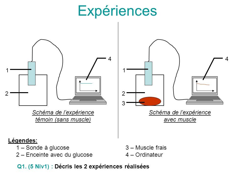 Schéma de lexpérience avec muscle 1 2 3 4 Schéma de lexpérience témoin (sans muscle) 1 2 4 Légendes: 1 – Sonde à glucose 3 – Muscle frais 2 – Enceinte