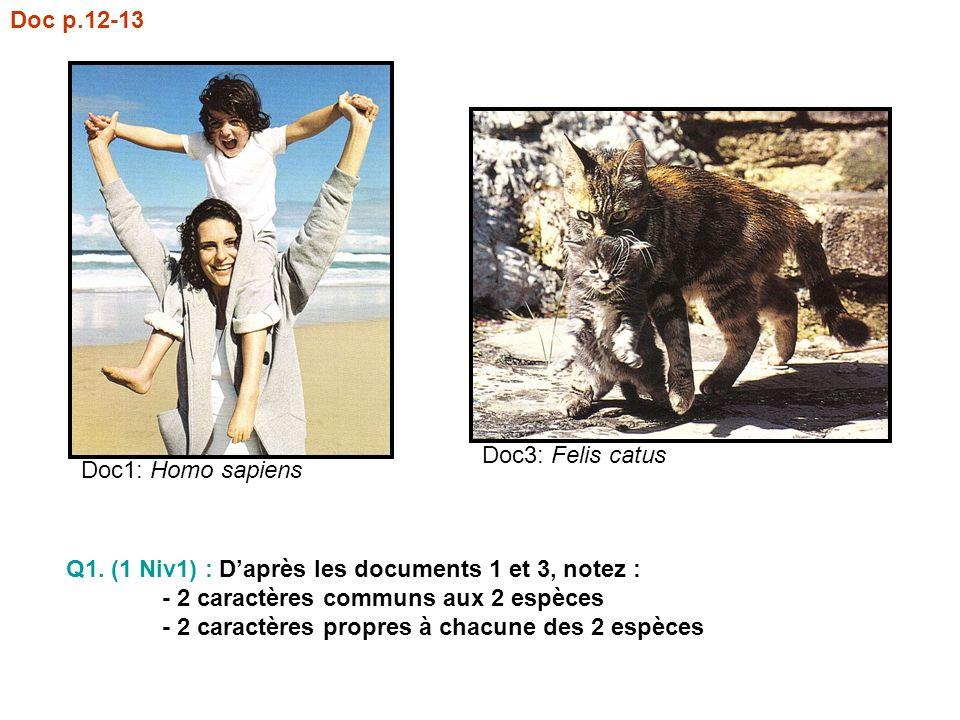Doc p.12-13 Doc1: Homo sapiens Doc3: Felis catus Q1. (1 Niv1) : Daprès les documents 1 et 3, notez : - 2 caractères communs aux 2 espèces - 2 caractèr