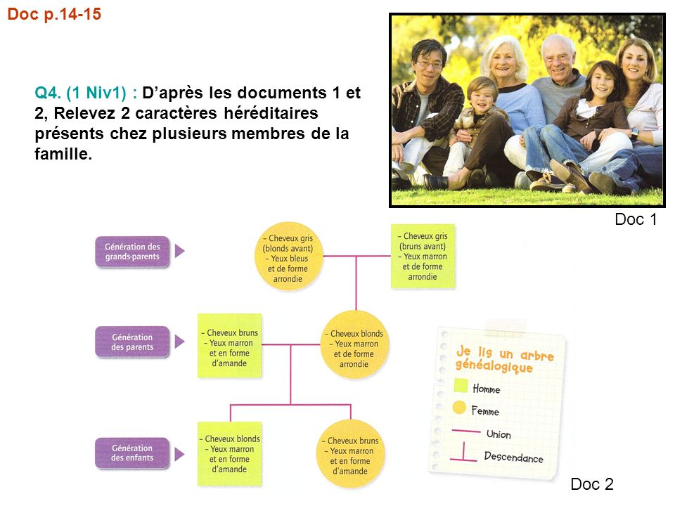Q4. (1 Niv1) : Daprès les documents 1 et 2, Relevez 2 caractères héréditaires présents chez plusieurs membres de la famille. Doc 1 Doc 2 Doc p.14-15