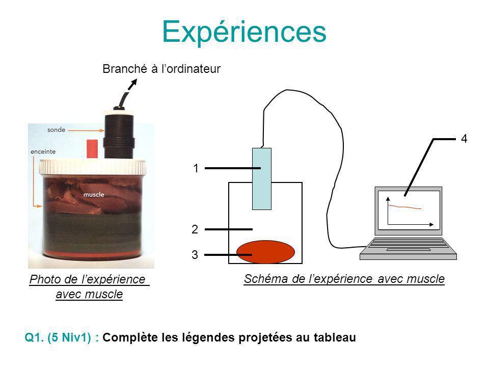 Schéma de lexpérience avec muscle 1 2 3 4 Schéma de lexpérience témoin (sans muscle) 1 2 4 Légendes: 1 – Sonde à dioxygène (=O 2 ) 2 – Enceinte 3 – Muscle frais 4 – Ordinateur Q2.