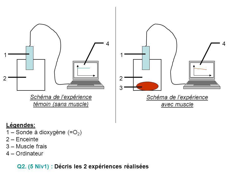 Schéma de lexpérience avec muscle 1 2 3 4 Schéma de lexpérience témoin (sans muscle) 1 2 4 Légendes: 1 – Sonde à dioxygène (=O 2 ) 2 – Enceinte 3 – Mu