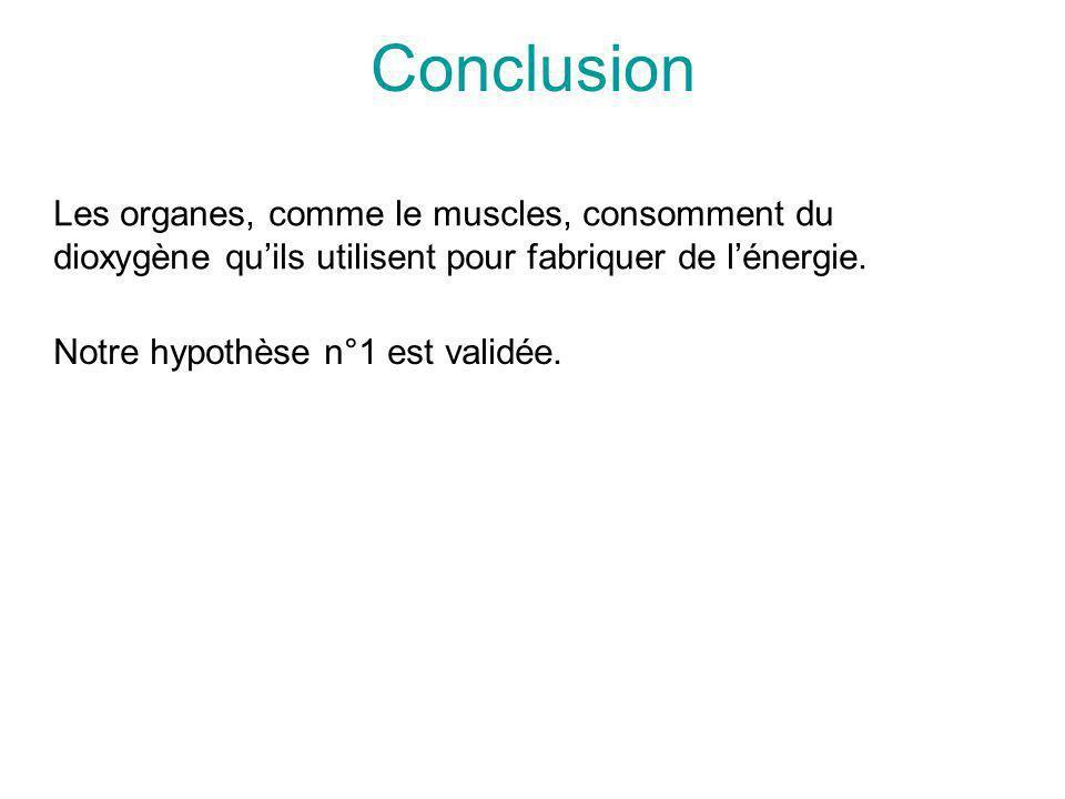 Conclusion Les organes, comme le muscles, consomment du dioxygène quils utilisent pour fabriquer de lénergie. Notre hypothèse n°1 est validée.