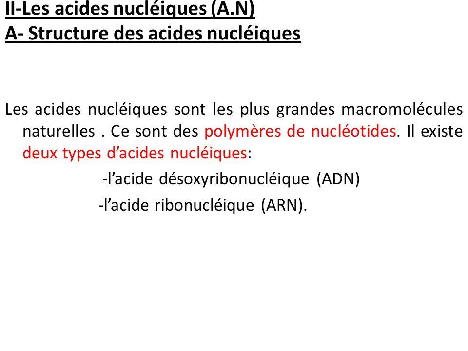 II-Les acides nucléiques (A.N) A- Structure des acides nucléiques Les acides nucléiques sont les plus grandes macromolécules naturelles. Ce sont des p