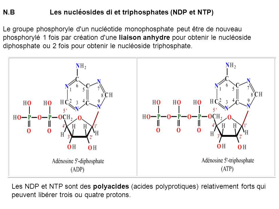 N.B Les nucléosides di et triphosphates (NDP et NTP) Le groupe phosphoryle d'un nucléotide monophosphate peut être de nouveau phosphorylé 1 fois par c
