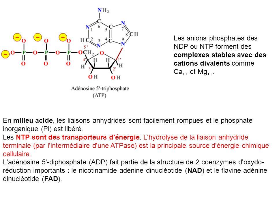En milieu acide, les liaisons anhydrides sont facilement rompues et le phosphate inorganique (Pi) est libéré. Les NTP sont des transporteurs d'énergie